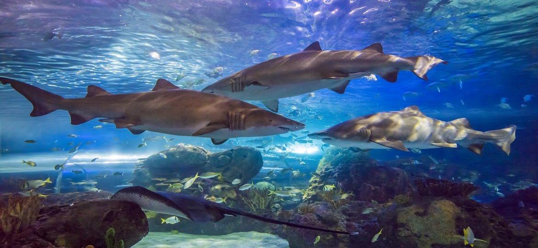 Dangerous Lagoon - Sharks resize