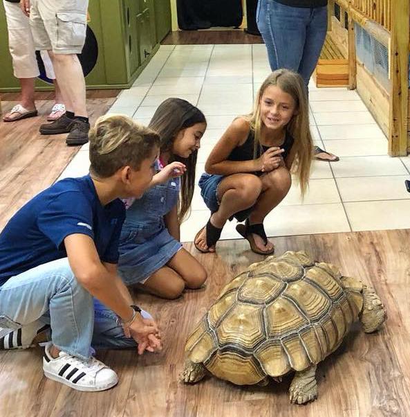 AA tortoise