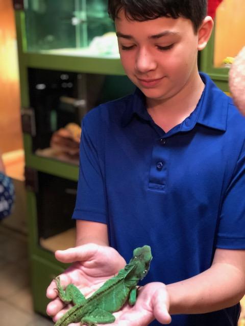Mushi Lizard