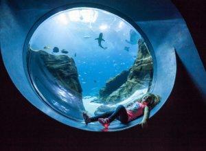 GA Aquarium girl in observation area