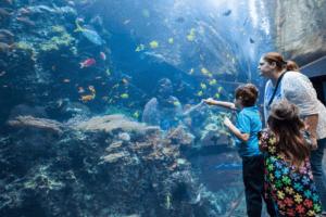 GA Aquarium Family trip