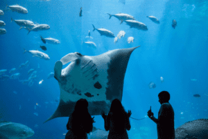 GA Aquarium Kids looking at sting ray