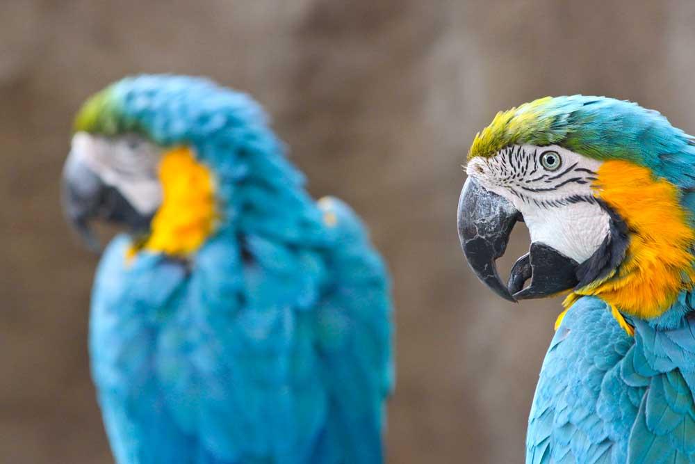 Santa Barbara Zo Macaws